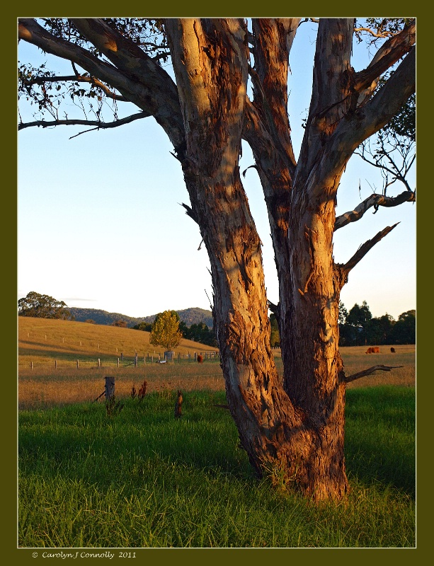 * Rural Tranquility #4 *<p>