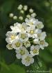 Delicate Bouquet