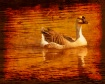 Grungy Goose