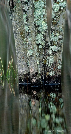 a reflection  (General Category)