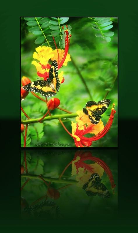 Texas Butterflies - ID: 11681405 © JudyAnn Rector