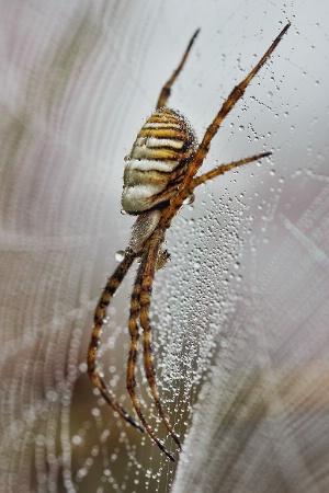 Dew Catcher