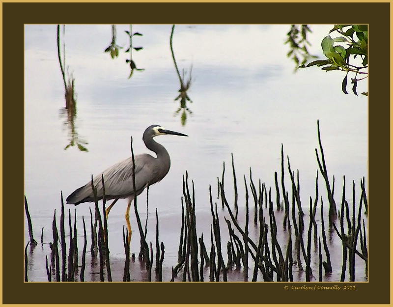 * Fishing in the Mangroves *<p>