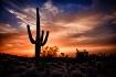 Saguaro at sunset