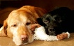 SHARING A BEDTIME...
