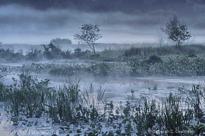 The Great Swamp - ID: 11708689 © Deborah C. Lewinson