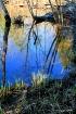 Spring Creek Refl...
