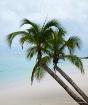Caribbean Dream #...