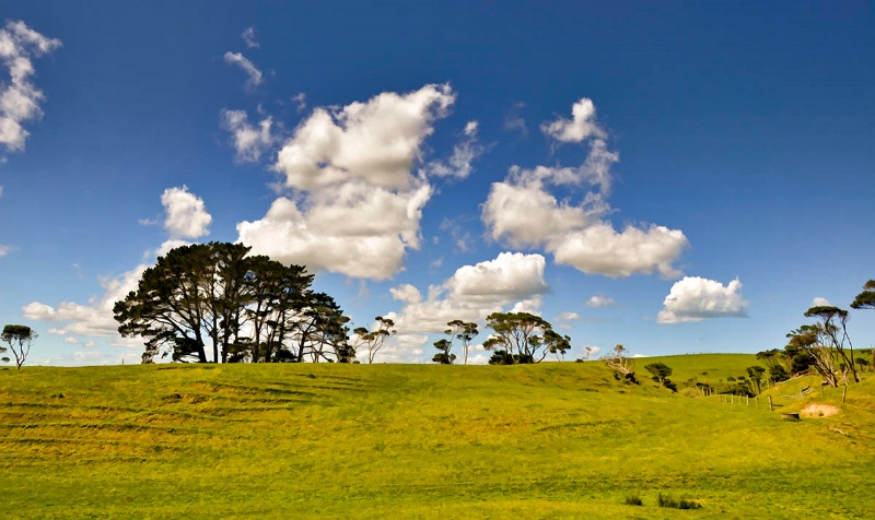 Trees On a Hill - ID: 11722063 © Paul Coco