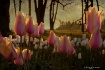 Forest tulips