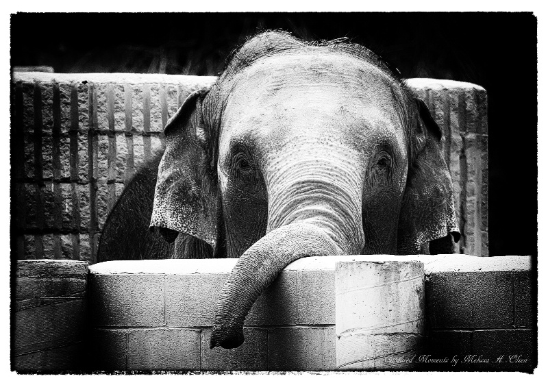Trunk Play