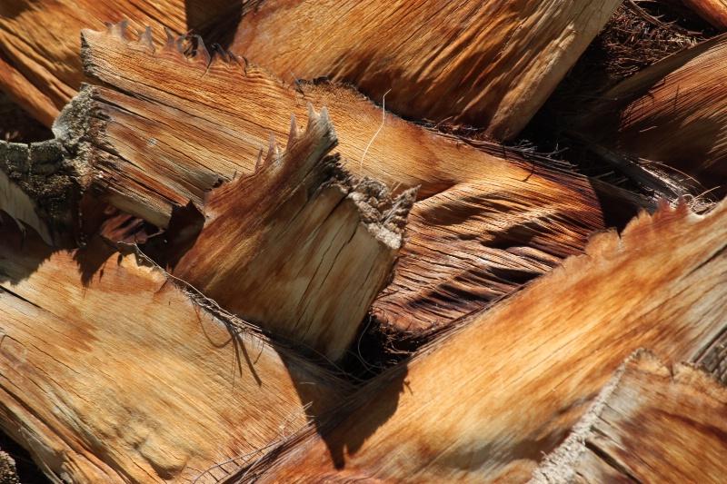 "Palm Tree ""Bark"" - ID: 11750904 © Sheryl K. Larson"