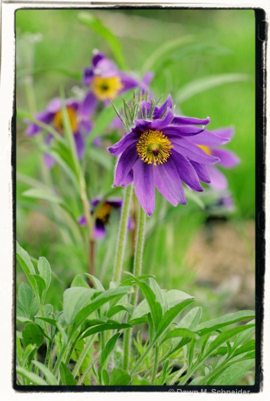 Purple Passion 2