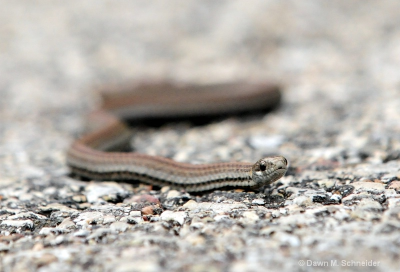 Slither 1