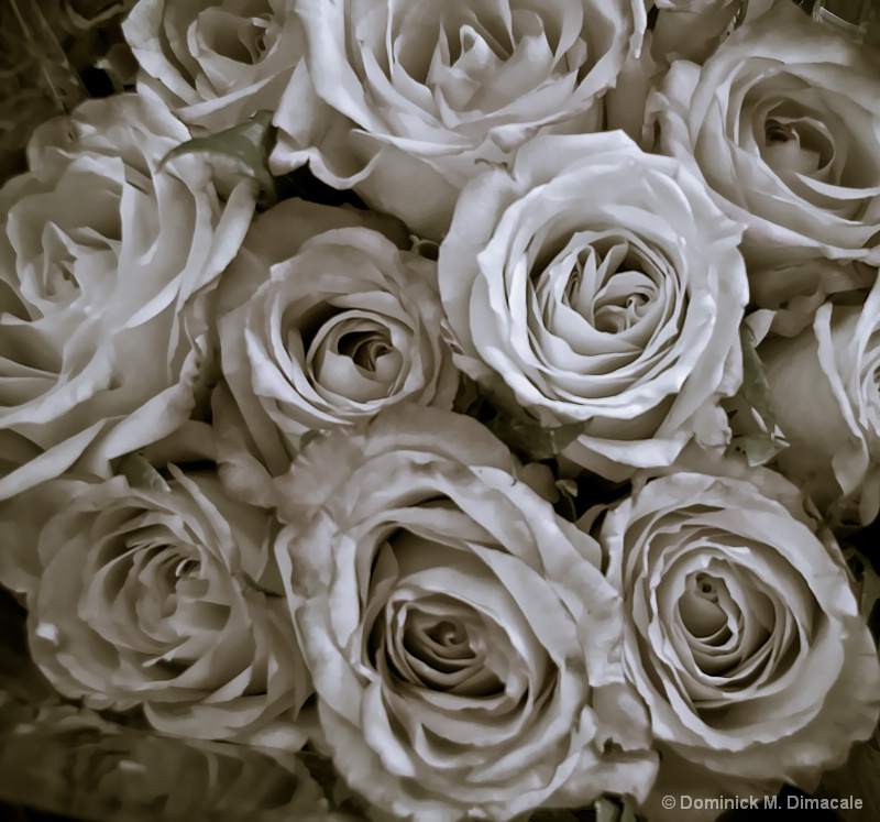 ~ SUPERMARKET ROSES ~ - ID: 11764458 © Dominick M. Dimacale
