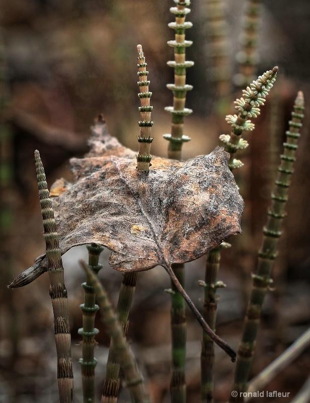 through the leaf