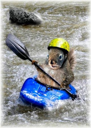 Kayaking Squirrel