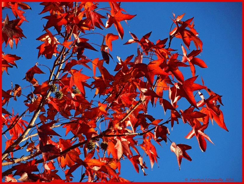 * Autumn's Splendour #3 *<p>