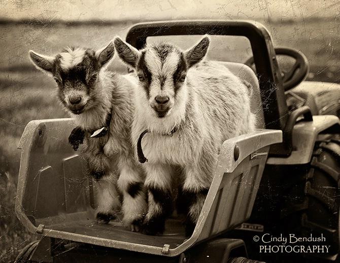 Sharing a Ride
