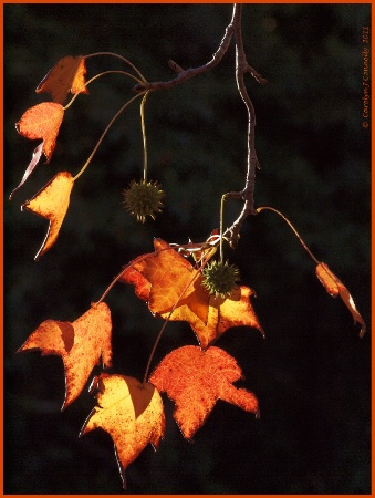 * Autumn's Splendour #4 *<p>