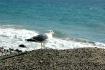 California Seagul...