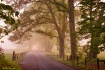 Foggy Morning In ...
