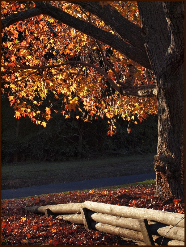 * Autumn's Splendour #5 *<p>