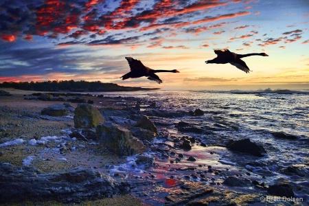 Black Swans on Flooded Sunrise