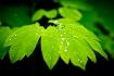 Spring rain on le...