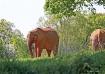 ELEPHANTS IN THE ...
