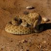 snake shaker