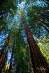 Muir Woods - May ...