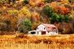 Autumns Embrace