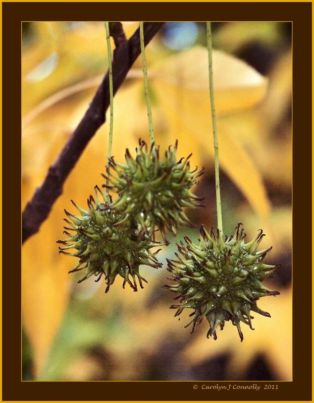* Autumn's Splendour #9 *<p>