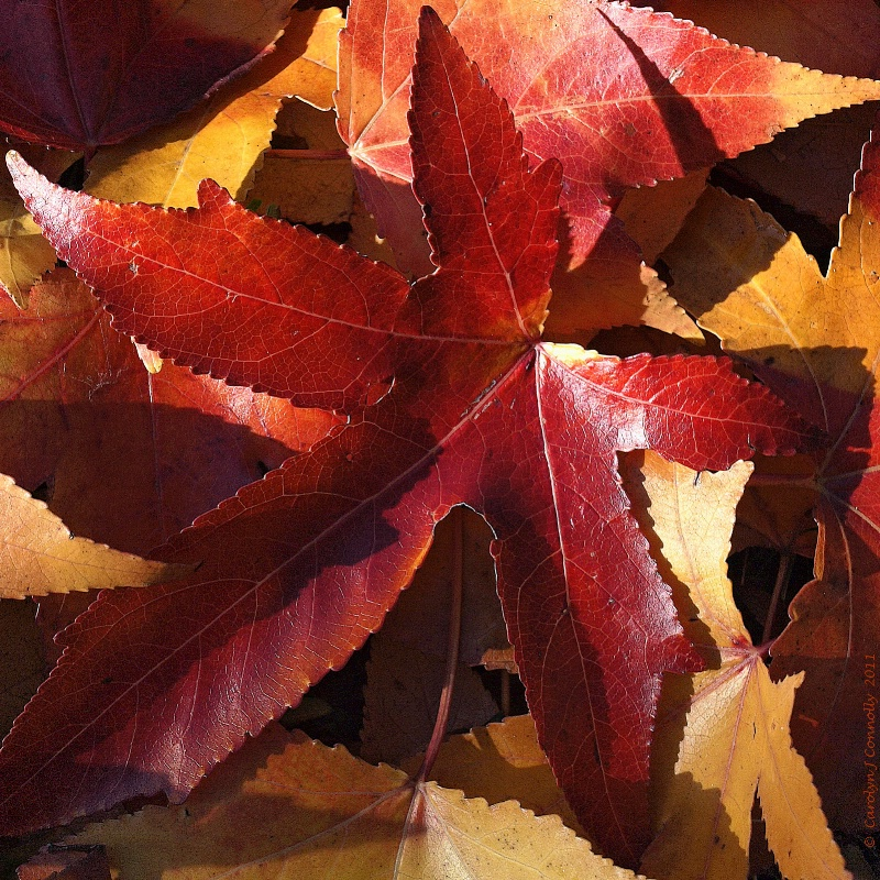 * Autumn's Splendour #10 *<p>