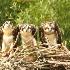 © Michael S. Couch PhotoID# 11901366: Osprey Nest, Lake Eufaula, AL  6.12.11