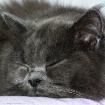 * Cat-Napping #2 ...