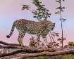 Cheetah - The Wor...