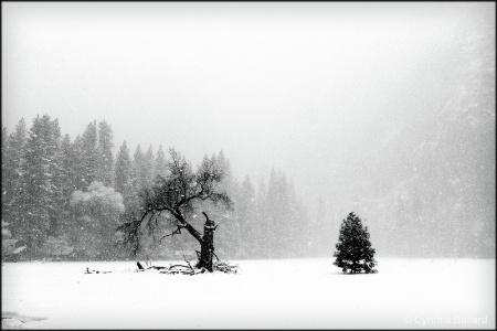 Winter in Yosemite