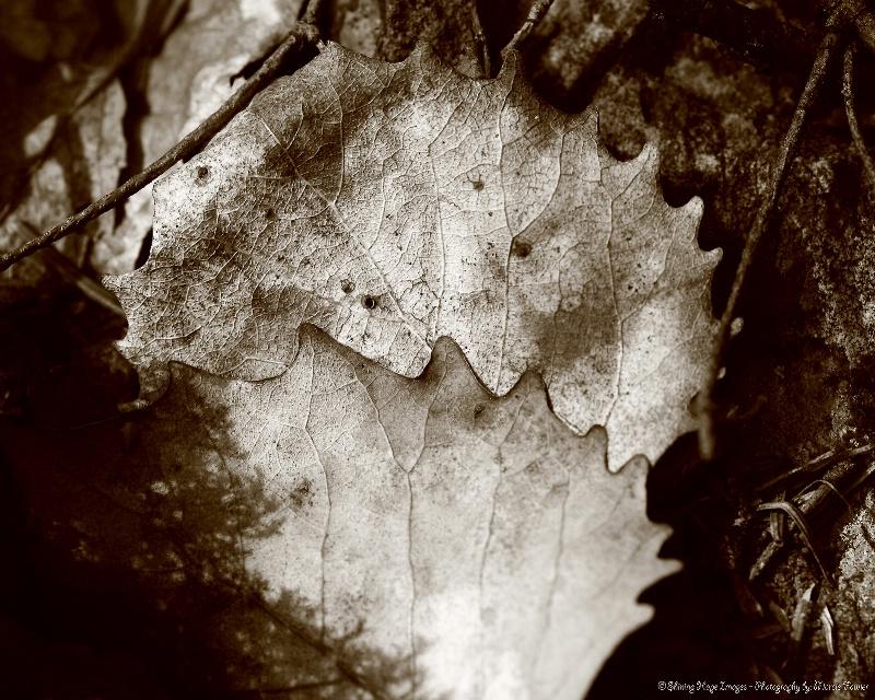 ~Design of Nature~