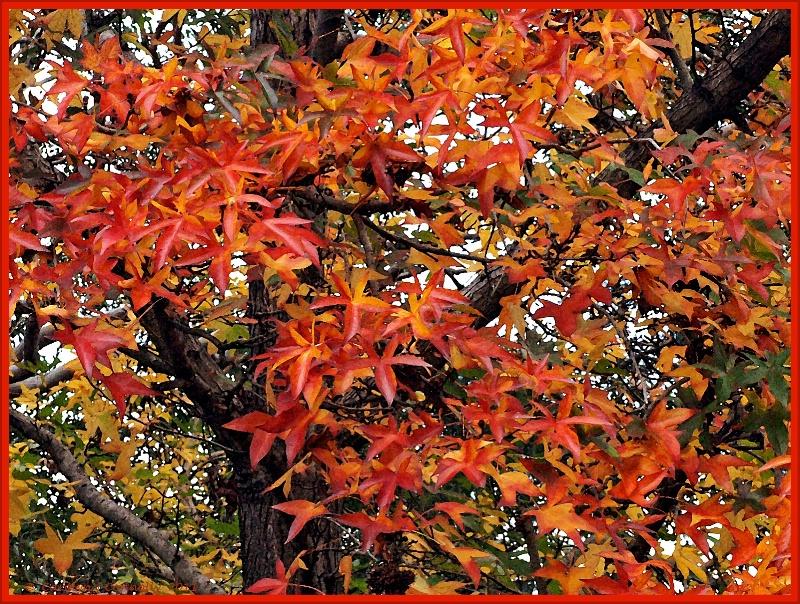 * Autumn's Splendour #12 *<p>
