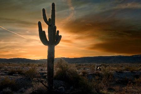 Exploring the Arizona Desert