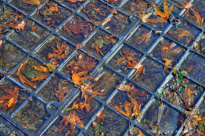 Leaves on the Grate