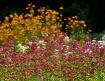 Bouquet of Color