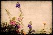 I take flowers (I...