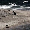 - The Birds -