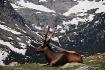Mr. Elk