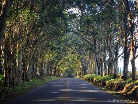 Maluhia Road Tree Tunnel