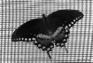 Wings 'n'...