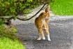 Breakdancing Cat